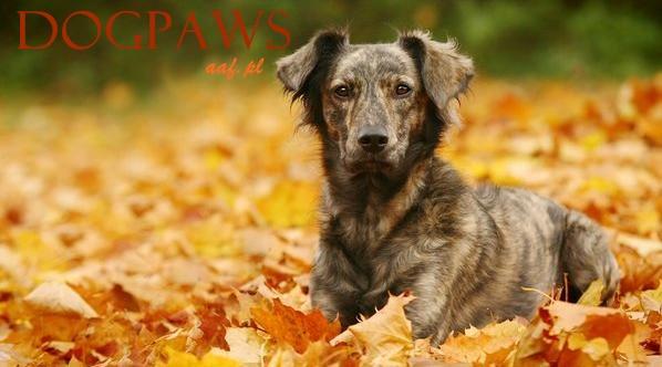 Dog-Paws Strona Główna